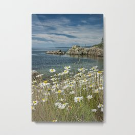 Daisies on Maine's Acadia Shoreline Metal Print