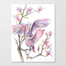 Two spoonbills on a Magnolia tree, Roseate Spoonbill, Magnolia Canvas Print