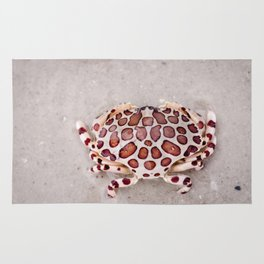 Sea Cucumber Crab - Sanibel Island, Florida Rug