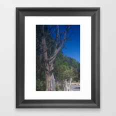 Grand Canyon Tree Framed Art Print