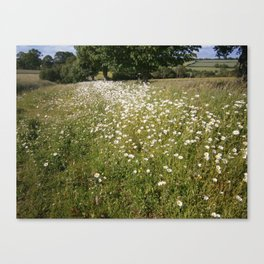 Path of Daisies Canvas Print