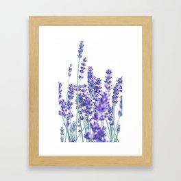 Fresh Lavender #1 #decor #art #society6 Framed Art Print