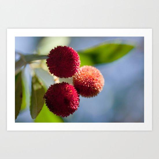 Strawberry tree fruits 8697 Art Print