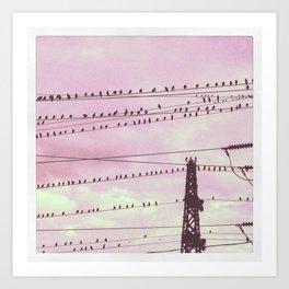 The flock watchs the sunset Art Print