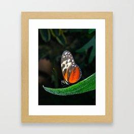 Grace of a Butterfly  Framed Art Print
