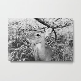 Fawn, Black & White Metal Print