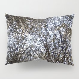 Branches Above Pillow Sham