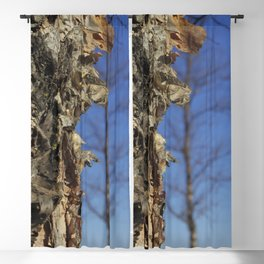 River Birch Bark up against the blues Blackout Curtain