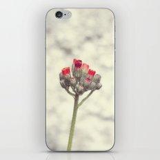 Wild flower iPhone & iPod Skin