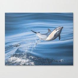 Uncommon Dolphin Canvas Print