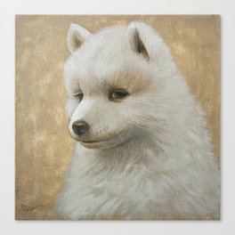 Baby Samoyed Canvas Print