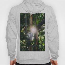 Sunlight Through Green Bamboo Tropical Forest Hoody