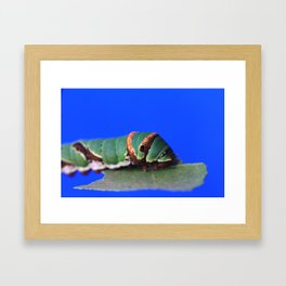 Caterpillar One Framed Art Print