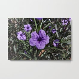 Purple Flower Bloom Metal Print
