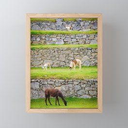 Llamas in Peru Framed Mini Art Print