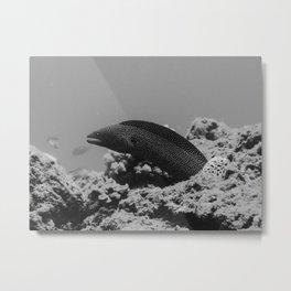 Poised to eel Metal Print