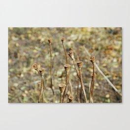 Dead Flora Canvas Print