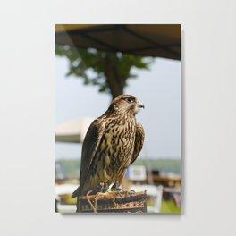 Falcon. Metal Print