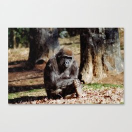 The Great Ape Canvas Print