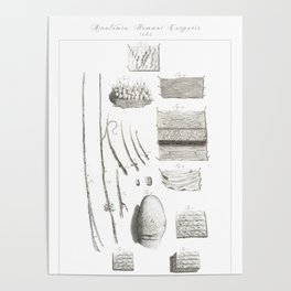 Human Anatomy Art Print FINGERPRINT EPIDERMIS FUR Vintage Anatomy, doctor medical art, Antique Book Poster