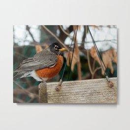 Robin beauty Metal Print