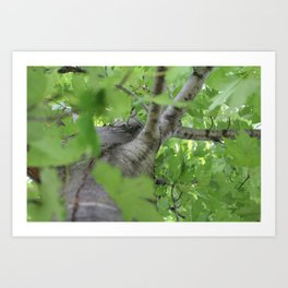 Depth of the Trees Art Print