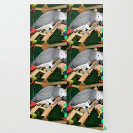 Doobie the parrot Wallpaper