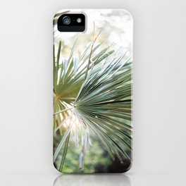 Palm tree in golden hour | Ethereal colors, close up | Wanderlust botanical print iPhone Case