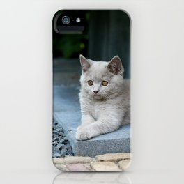 Bikkel the cat ! iPhone Case