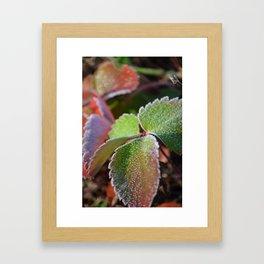Strawberry frost Framed Art Print