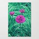 Purple ball flowers by maryberg