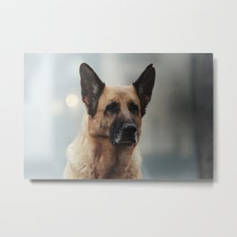 Portrait of a German Shepherd in Venice Metal Print