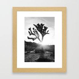 Joshua Tree with Sun Flare Framed Art Print