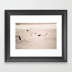 swoop - seagull - beach - florida Framed Art Print