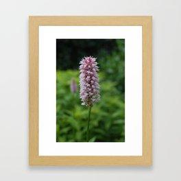 Blushing Bridewort Framed Art Print