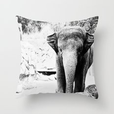 Dangerously Delicate Throw Pillow