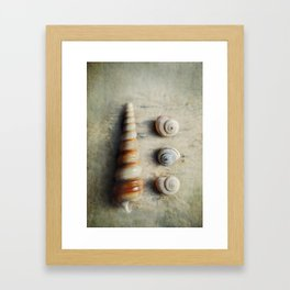Shells on Beach wood. Framed Art Print