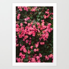 California Blooms II Art Print