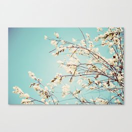 Spring Willows Canvas Print