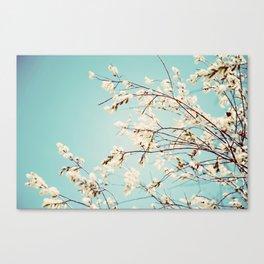 Spring Willows Canvas Print