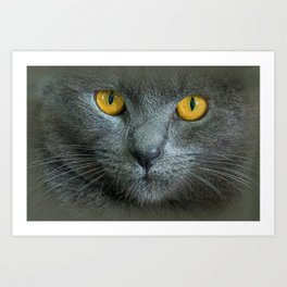 THE LOVE OF CATS Art Print