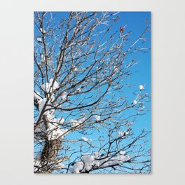 Winter Time Tree Canvas Print