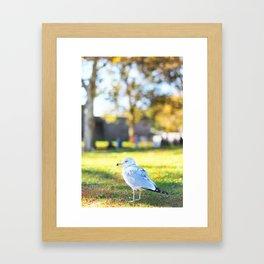 177. Early Seagull, New York Framed Art Print