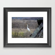 Great Egret  Framed Art Print