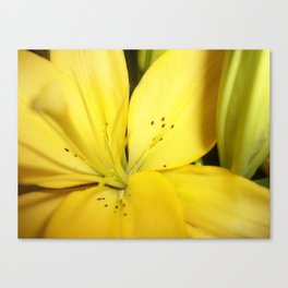 Yellow Tiger Lily Canvas Print