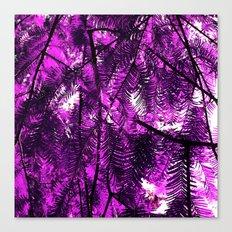 purple fir tree Canvas Print
