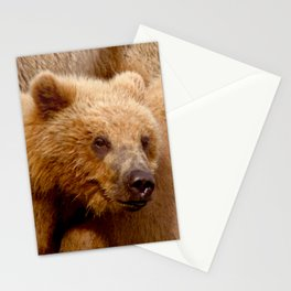 Brown Bear Grizzly Stationery Cards