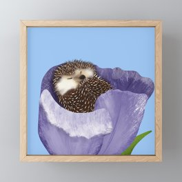 Sleeping Hedgehog In A Purple Tulip / Spring Decor Framed Mini Art Print