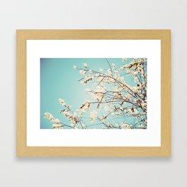 Spring Willows Framed Art Print