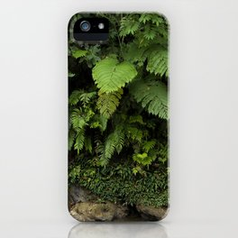 The elegance of life in the huge leaves of the jungles of Sumatra, Indonesia iPhone Case